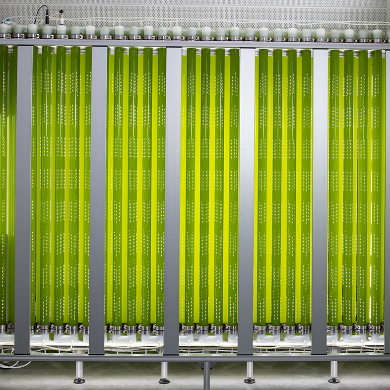 synoxis algae jumbo