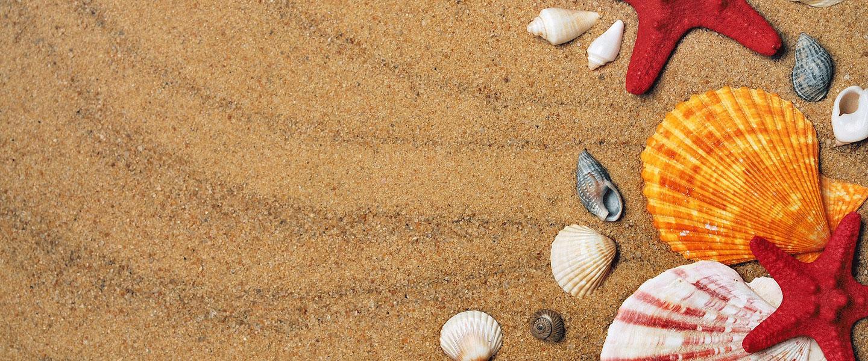 Retrouvez Synoxis Algae au salon de la Conchyliculture et des cultures marines