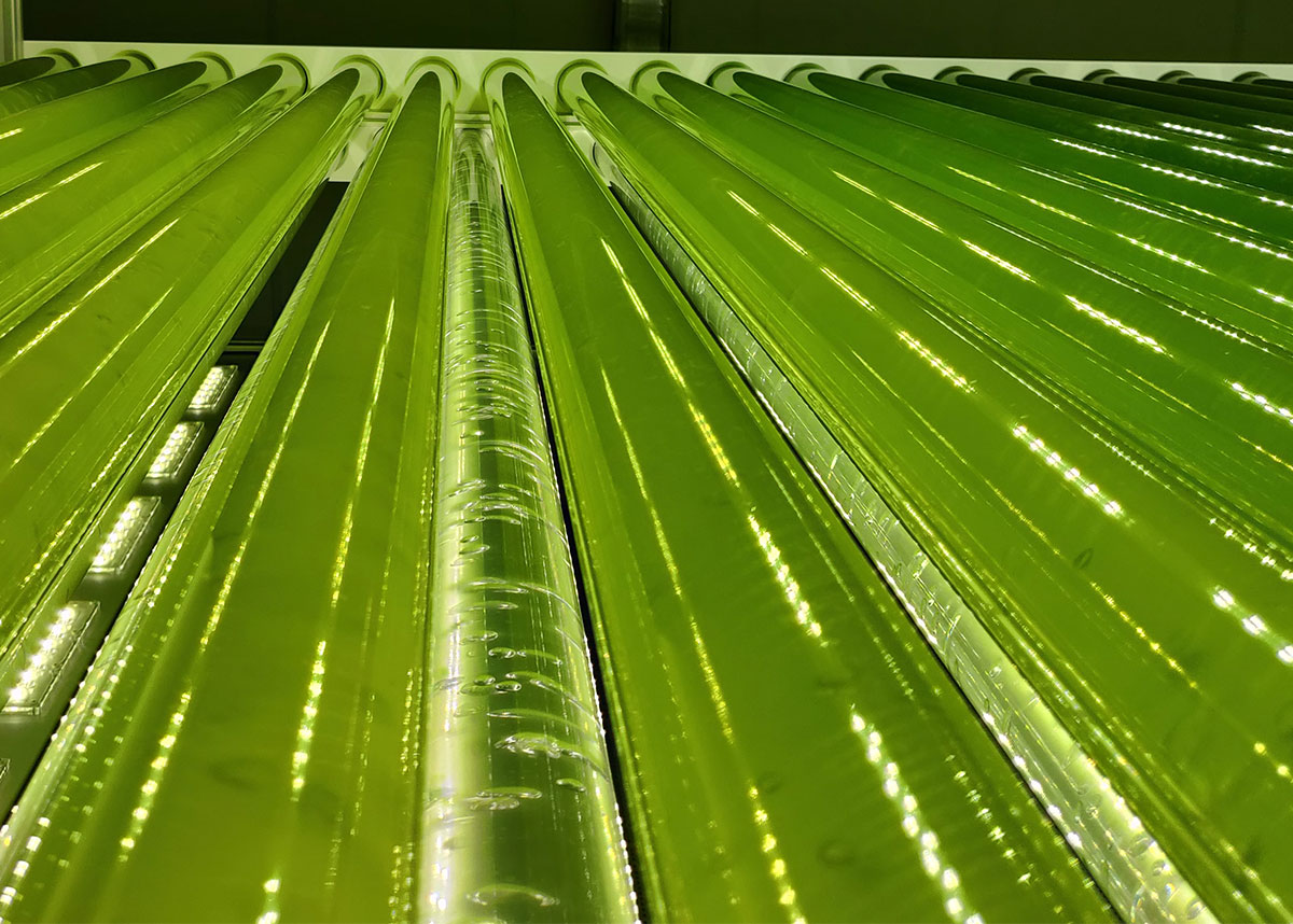 Our industrial photobioreactor JUMBO for microalgae cultivation