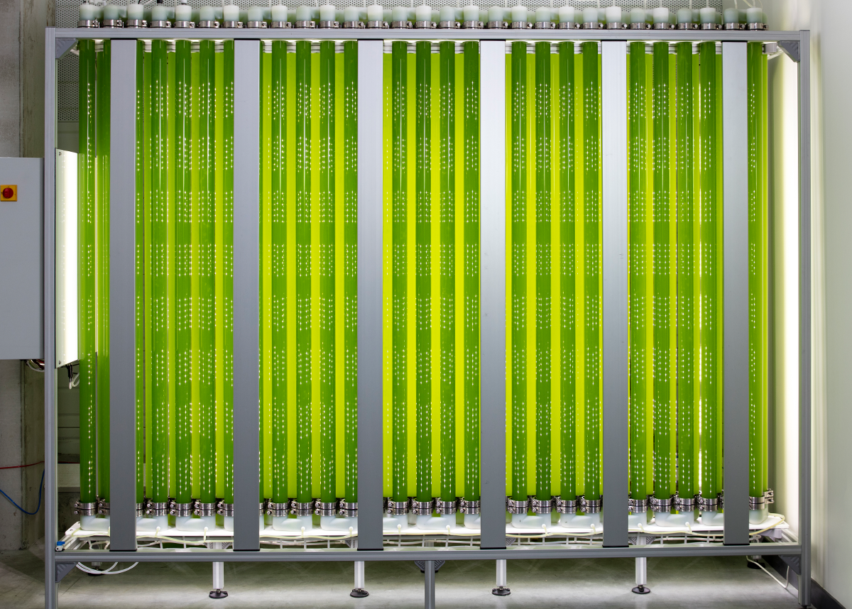 Our industrial photobioreactor JUMBO