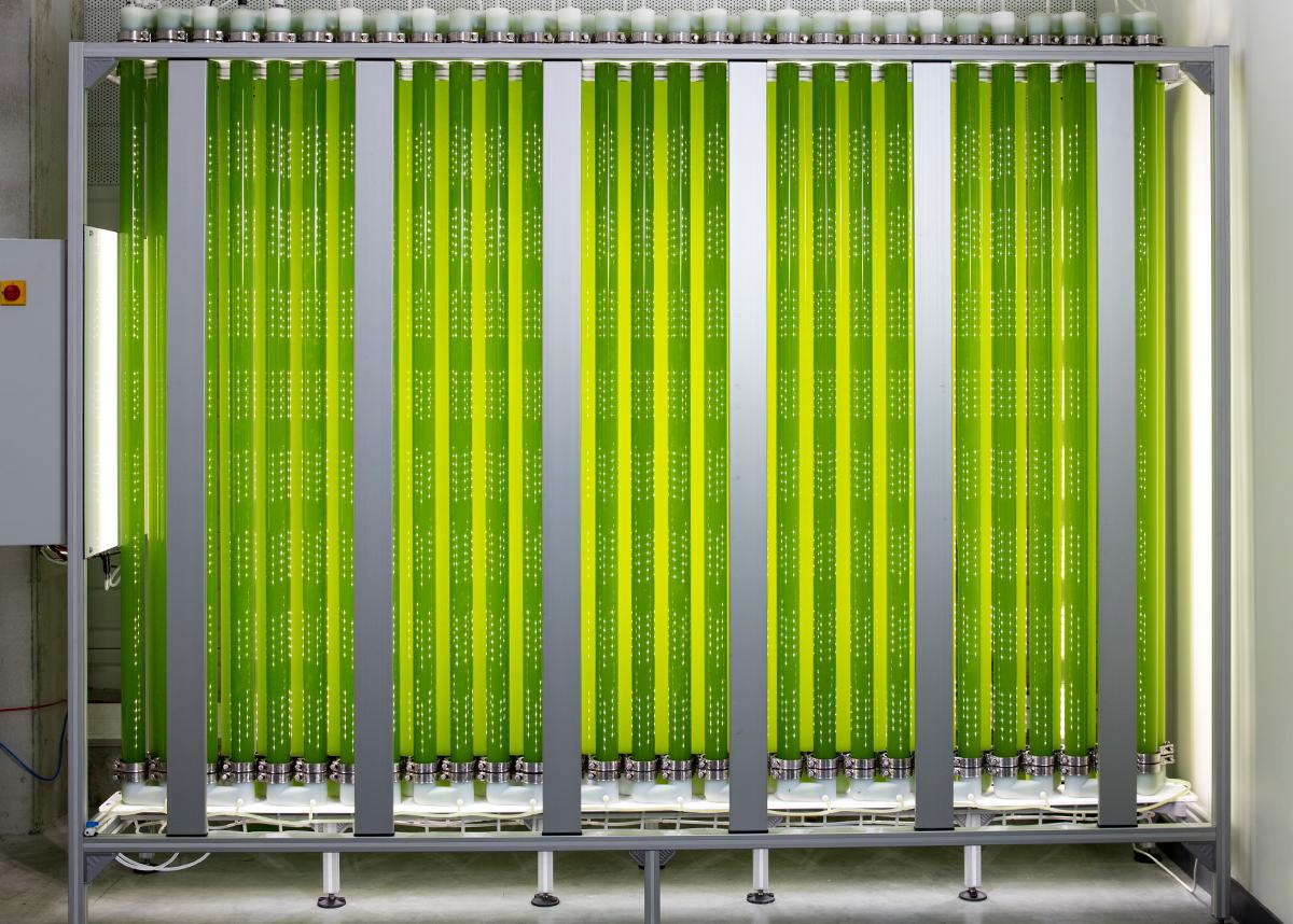 Un photobioréacteur industriel