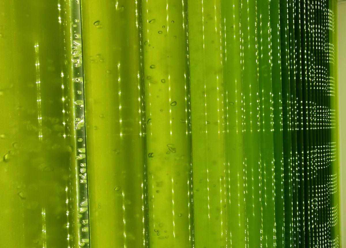 Photobioréacteur industriel pour production de microalgues
