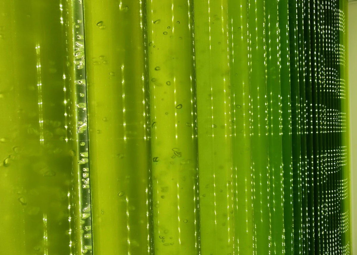 Production of microalgae in a photobioreactor