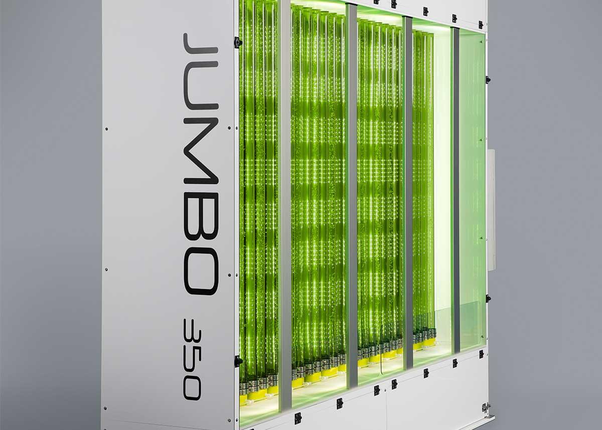 Microalgae cultivation in the industrial photobioreactor JUMBO of Synoxis Algae